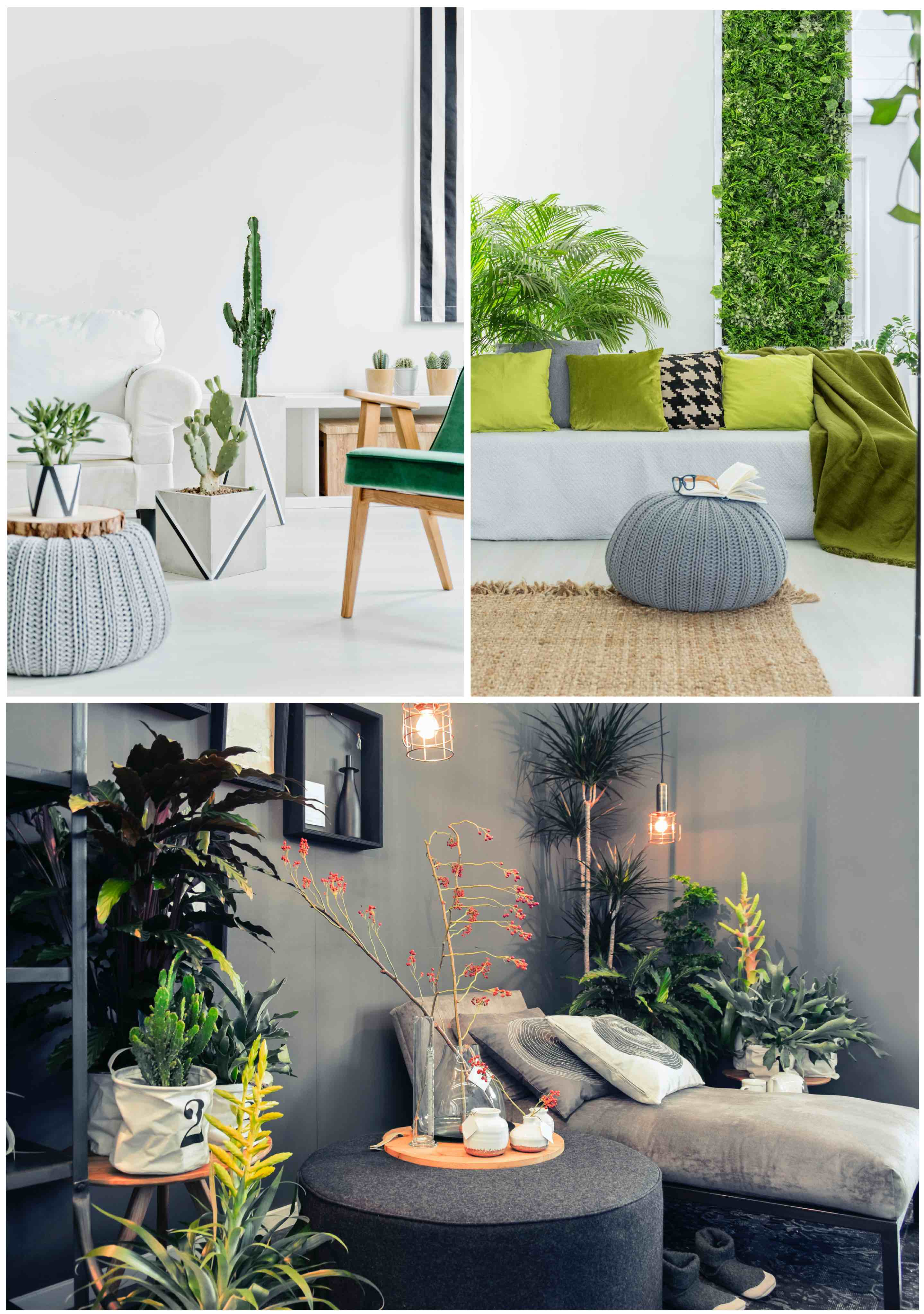 Interior Design Tip 2: Use plants to decorating your room