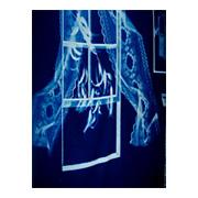 Blueprints Cotton Cyanotype Fabric