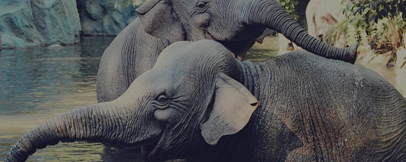 Disney-Elephants-Feature