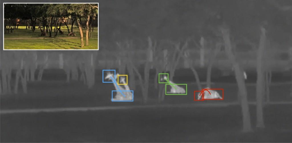 Monitoring Giraffe Behavior in Thermal Video-Image