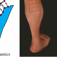 Dynamic Skin Deformation SimulationUsing Musculoskeletal Model and Soft Tissue Dynamics