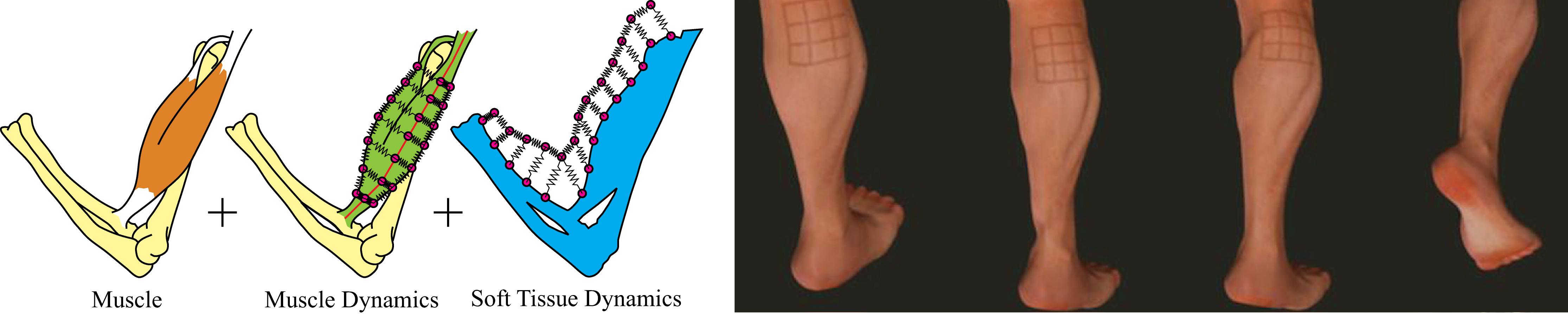 disney research dynamic skin deformation simulationusing