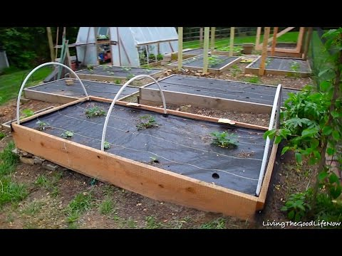 Protecting Garden Fruit & Berries DIY $10 Bird Netting Planter Box Hoops Strawberry