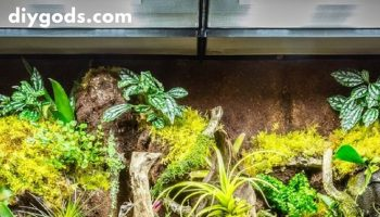 How-to-Make-the-Ultimate-Terrarium