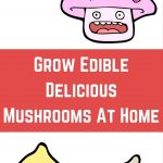 Grow Edible Delicious Mushrooms At Home Now