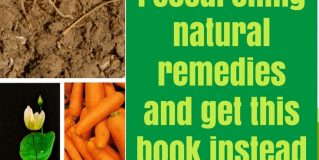10 Everyday Roots For A Healthy Body