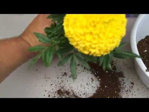 NEVER WATER YOUR PLANTS AGAIN!  How-To DIY Garden Hack Gardening Tips for Soil