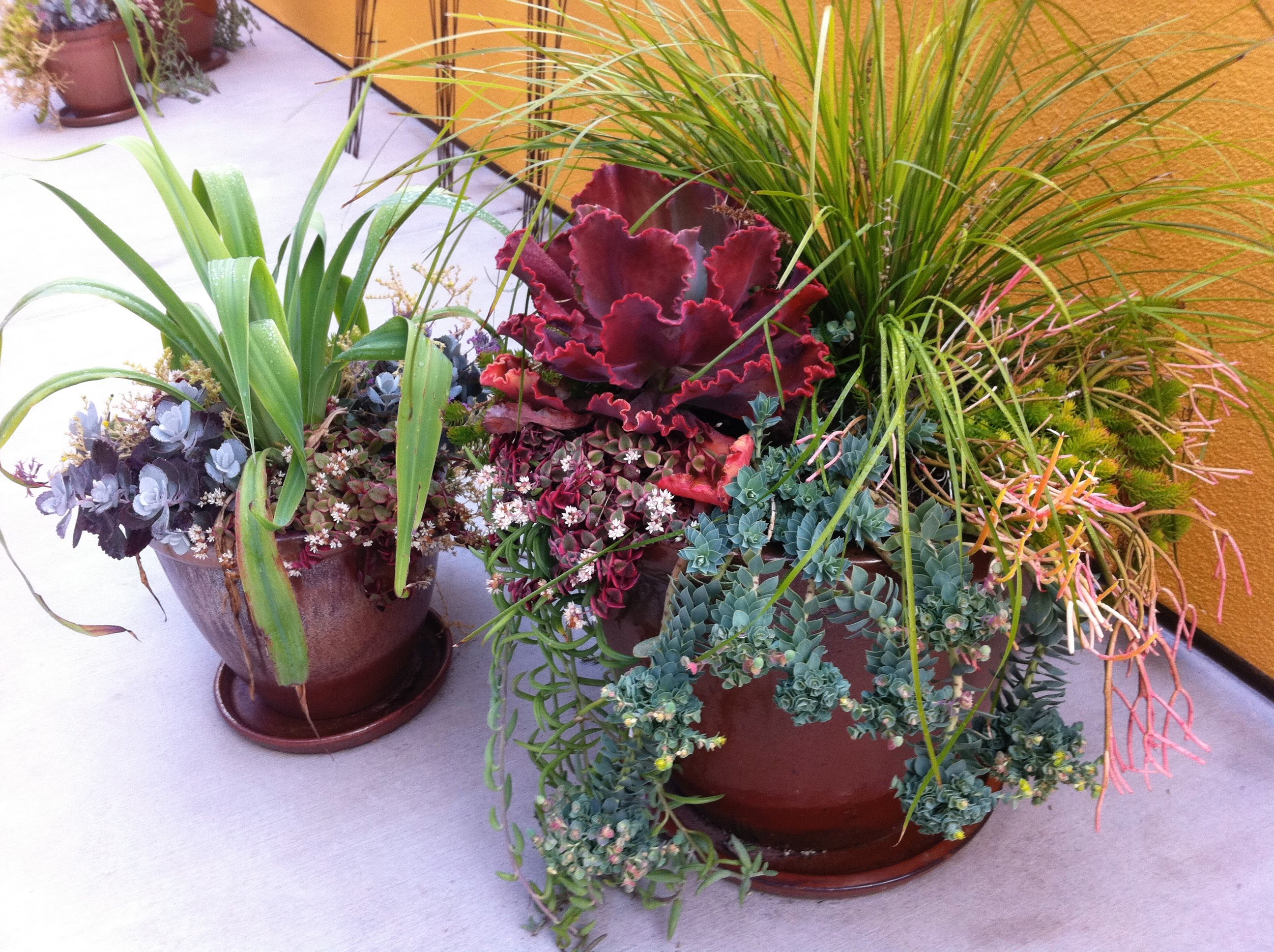 How to Use Pots in Landscape Design