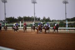 سباق الفروسية