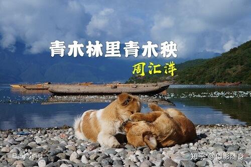 Qing Mu Lin Qing Mu Yang 青木林青木秧 Green Wood Seedling Lyrics 歌詞 With Pinyin