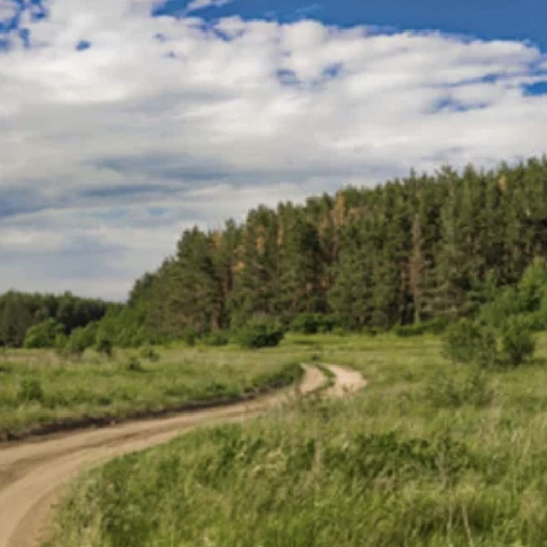 A dirt road winding through a meadow and forest