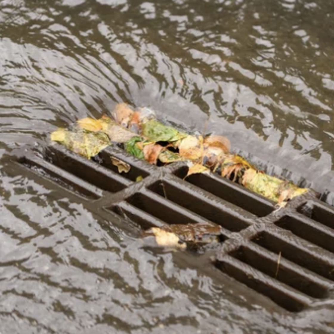 Leaves gathering in the grates of a storm drain surrounded by water