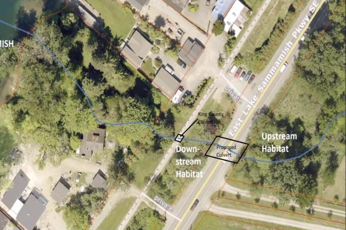 Ebright Creek Culvert at East Lake Sammamish Parkway (City) and East Lake Sammamish Regional Trail (County)
