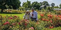 Owen.rose.garden