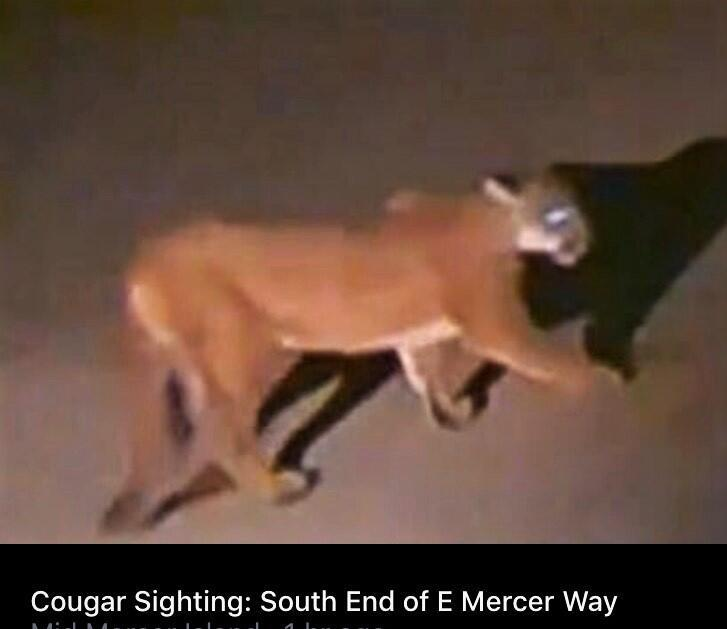 8.5 cougarimage