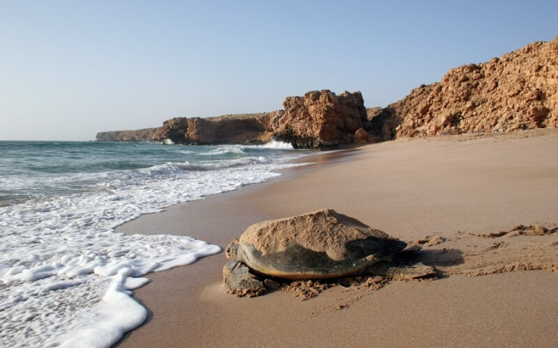 Ras Al Jinz - Oman