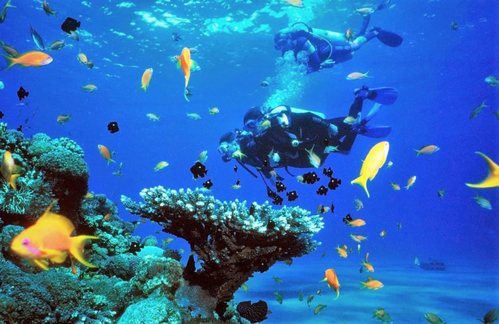 You will practice more about diving in the next day plus make an exploration of marine life
