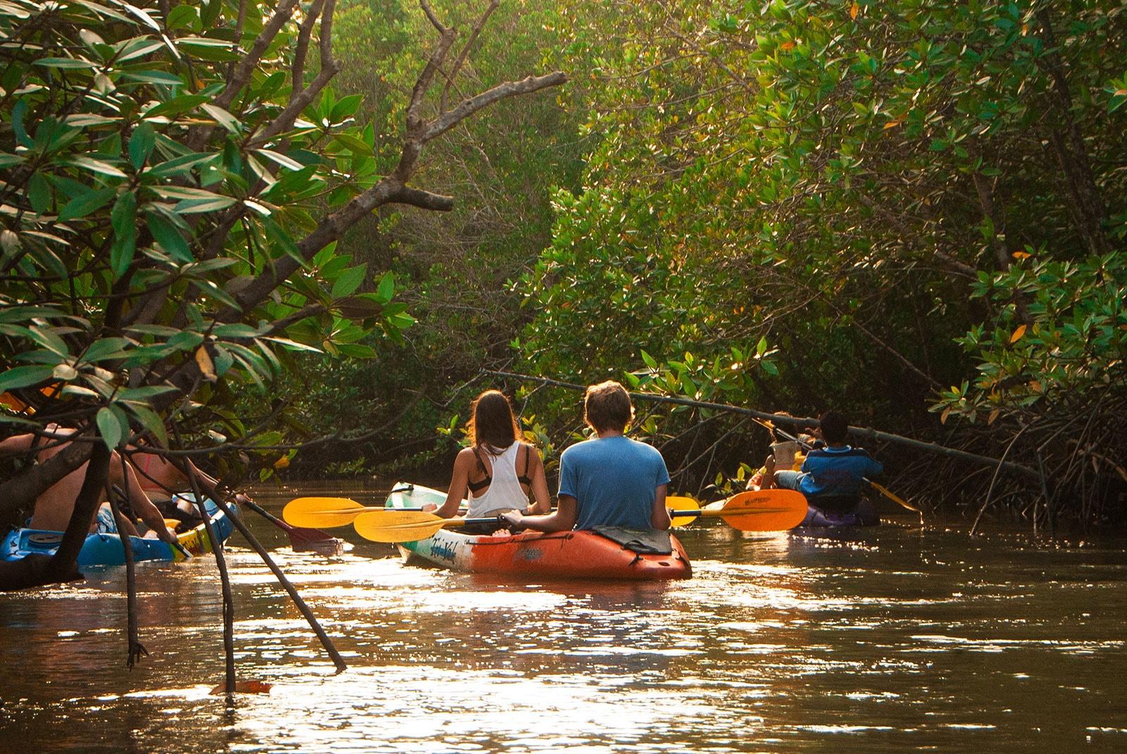 Ao Thalane mangrove forest