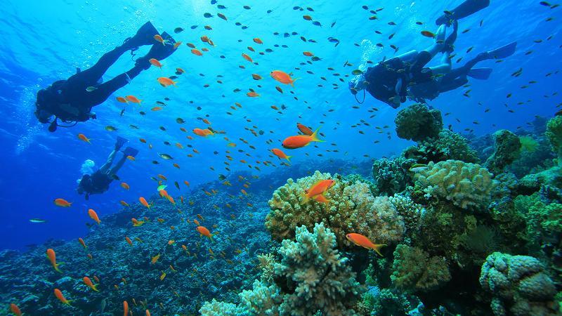 Explore the underwater life in Koh Phangan