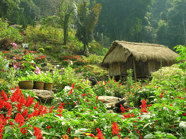 Drive about 4km away from Doi Suthep and learn an interesting history of the H'mong village on Doi Pui