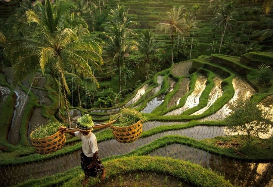 Tegalalang rice fields in Bali