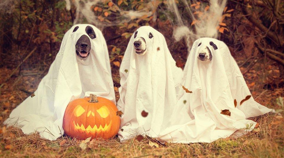 halloween_costume_5