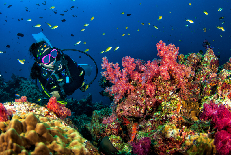 Scube_Diving_Coral_Reef_Thailand_Koh_Phangan