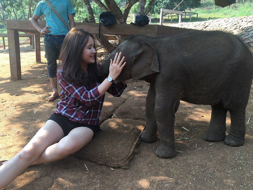 Tran Thuy is playing with a baby elephant in National Elephant Park, Chiang Mai, Thailand