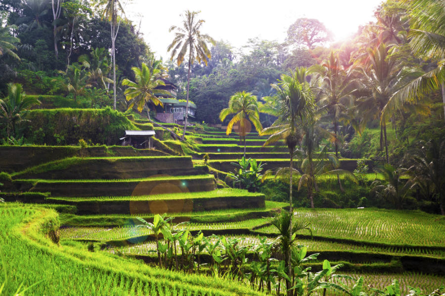 Indonesia-Tegalalang-rice-paddies