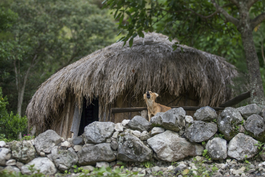 "A thatched-roof house of a Dani tribe. They are some the ""most decorative"" tribes in the West Papua, Indonesia."