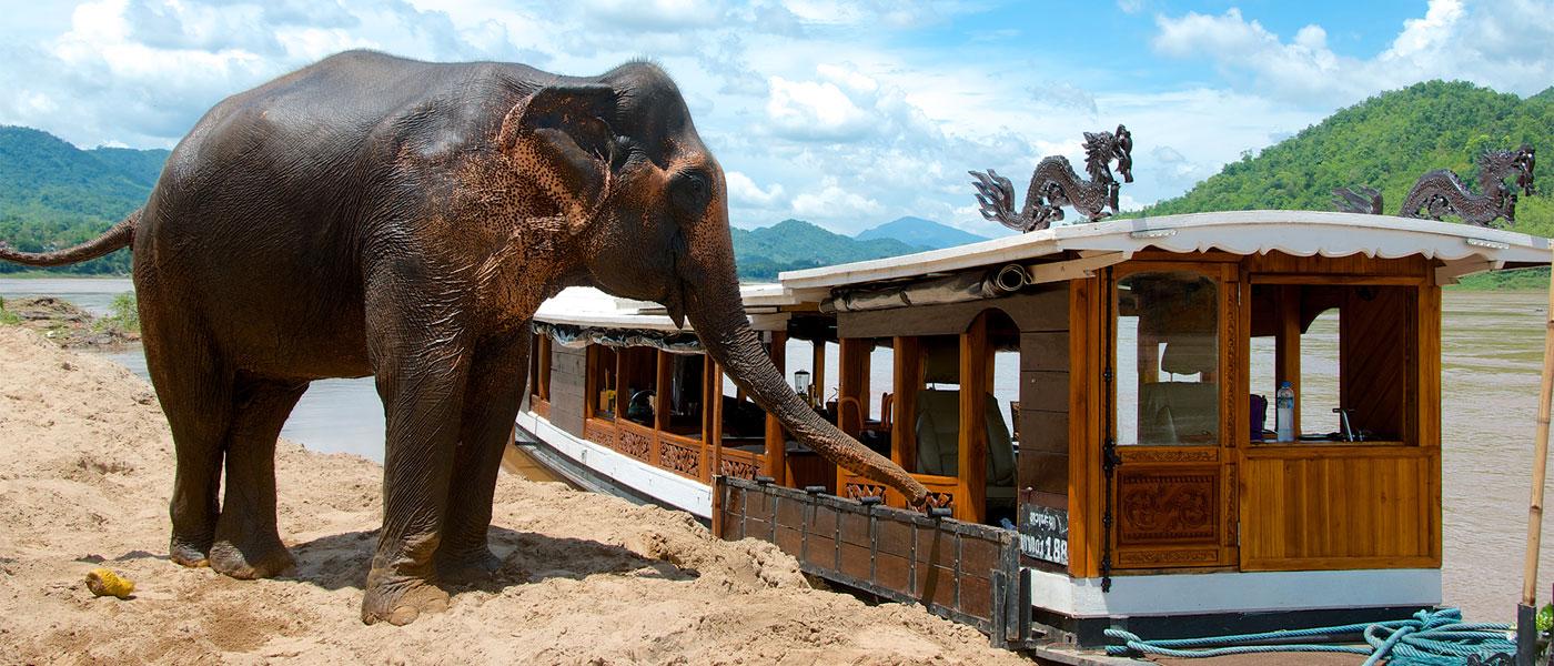 mekong_boat_cruises_laos_elephant