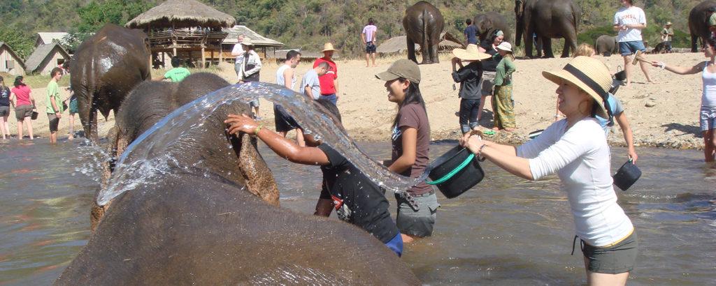 Elephant_nature_park_chiang_mai_thailand