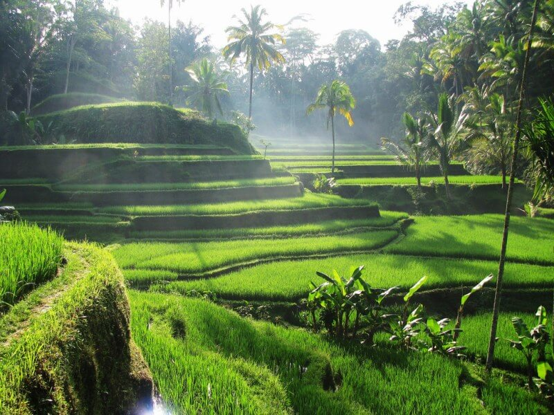8 most breathtaking rice terraces in asia exotic voyages for Tegalalang rice terrace ubud