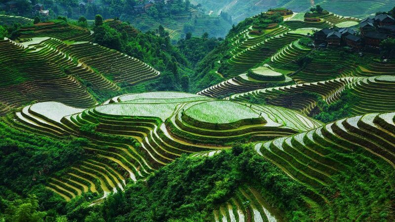 8 most breathtaking rice terraces in asia exotic voyages for What are terraces