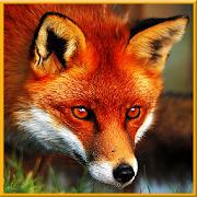 Angry Wild Fox Simulator