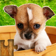Dogs Jigsaw Puzzles Game - For Kids & Adults ????