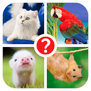 Guess the word - photo quiz