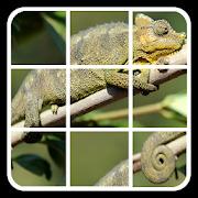 Animal Puzzle: Logic Slide puzzle