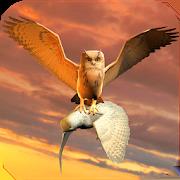 Clan of Owl