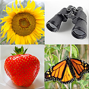 Easy Pictures - Photo-Quiz with 5 Different Topics