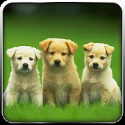 Pet Dog Simulator-Puppy Game