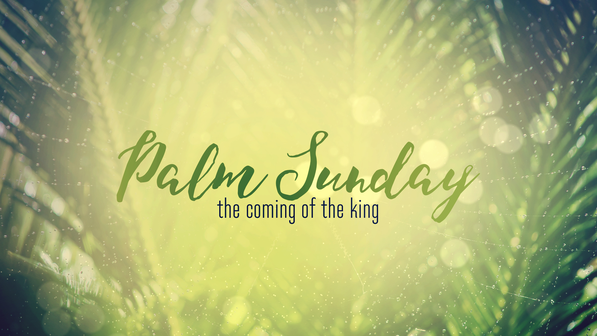 Palm Sunday - 2017