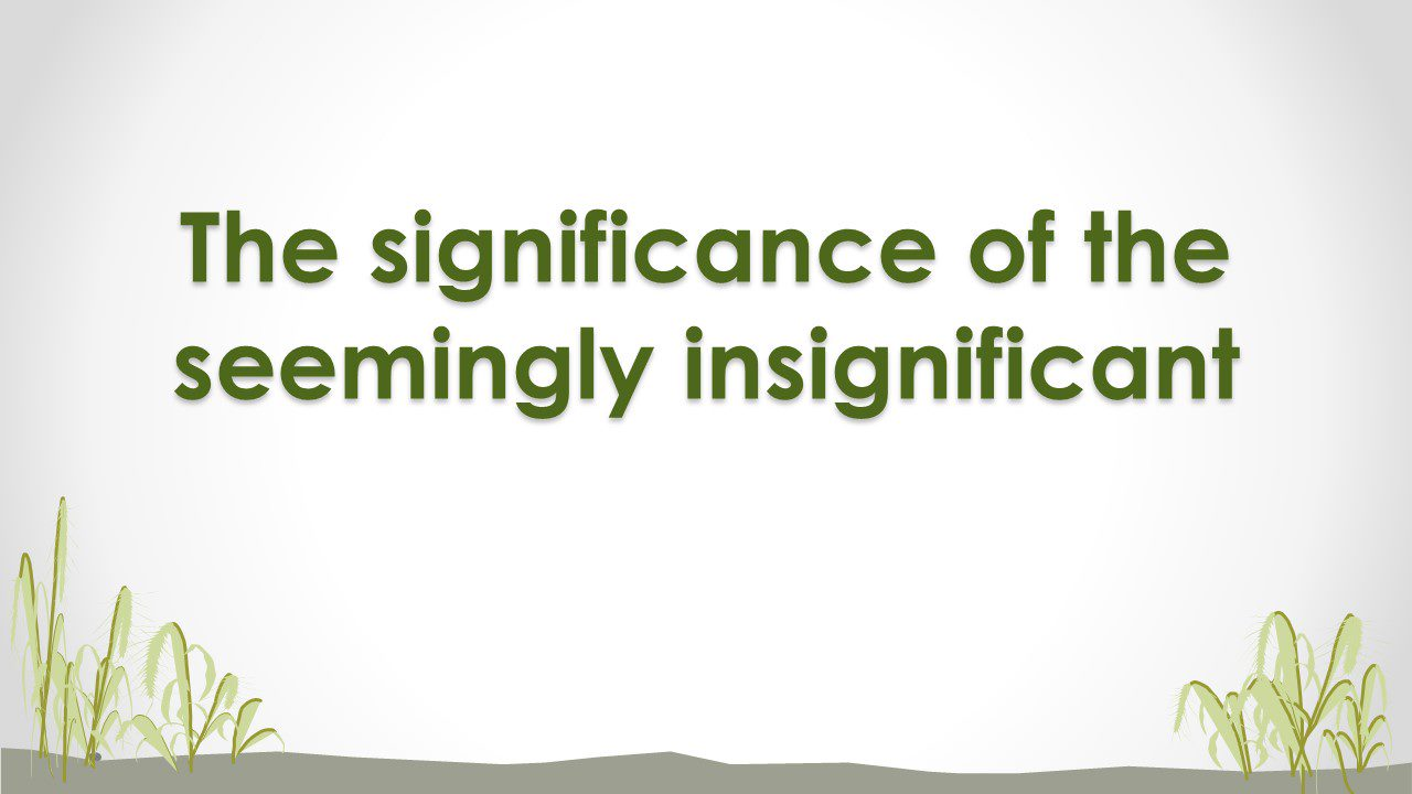 The Significance Of The Seemingly Insignificant