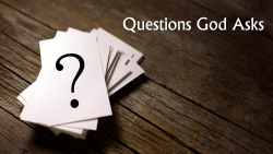 Questions God Asks-2