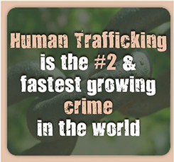 HT #2 Crime in World