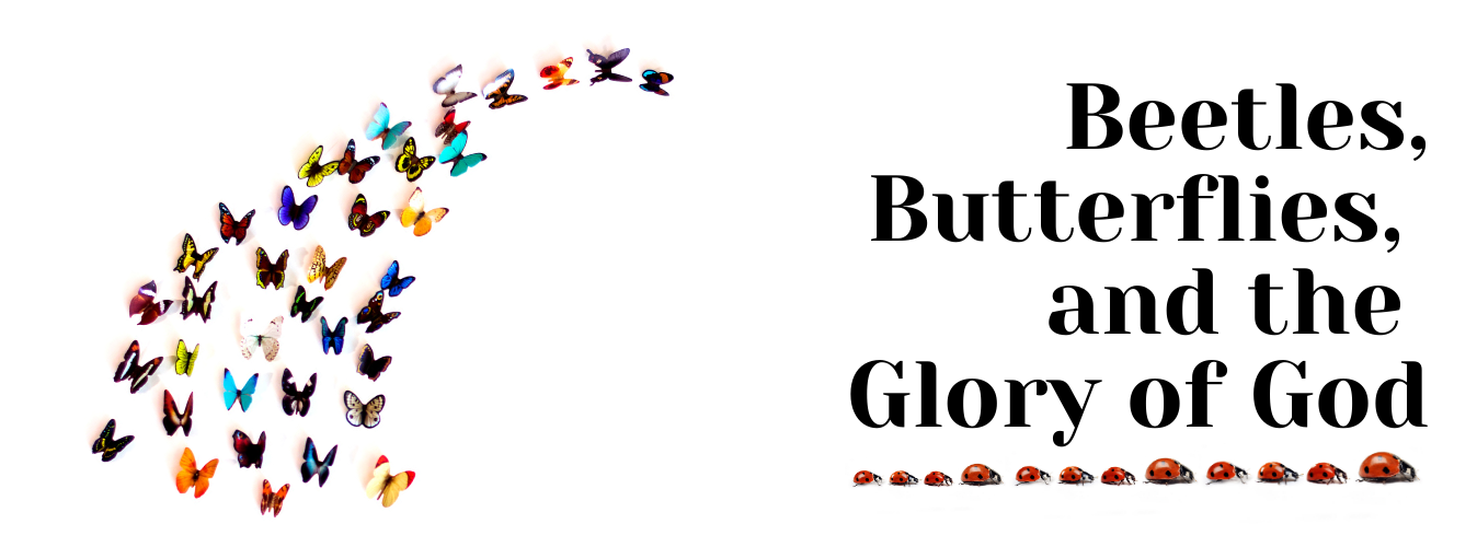 Beetles, Butterflies, and the Glory of God