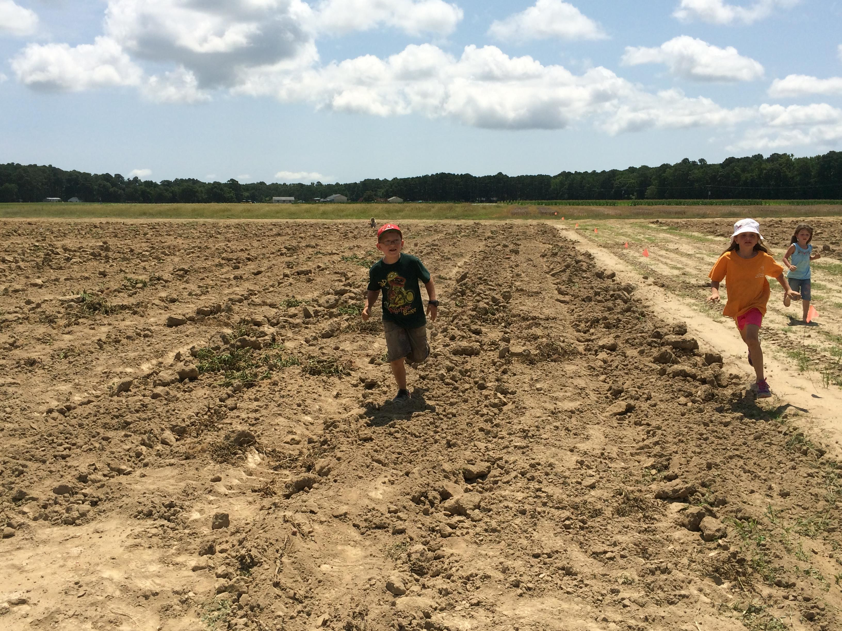 Potato Gleaning and Racing Around the Field