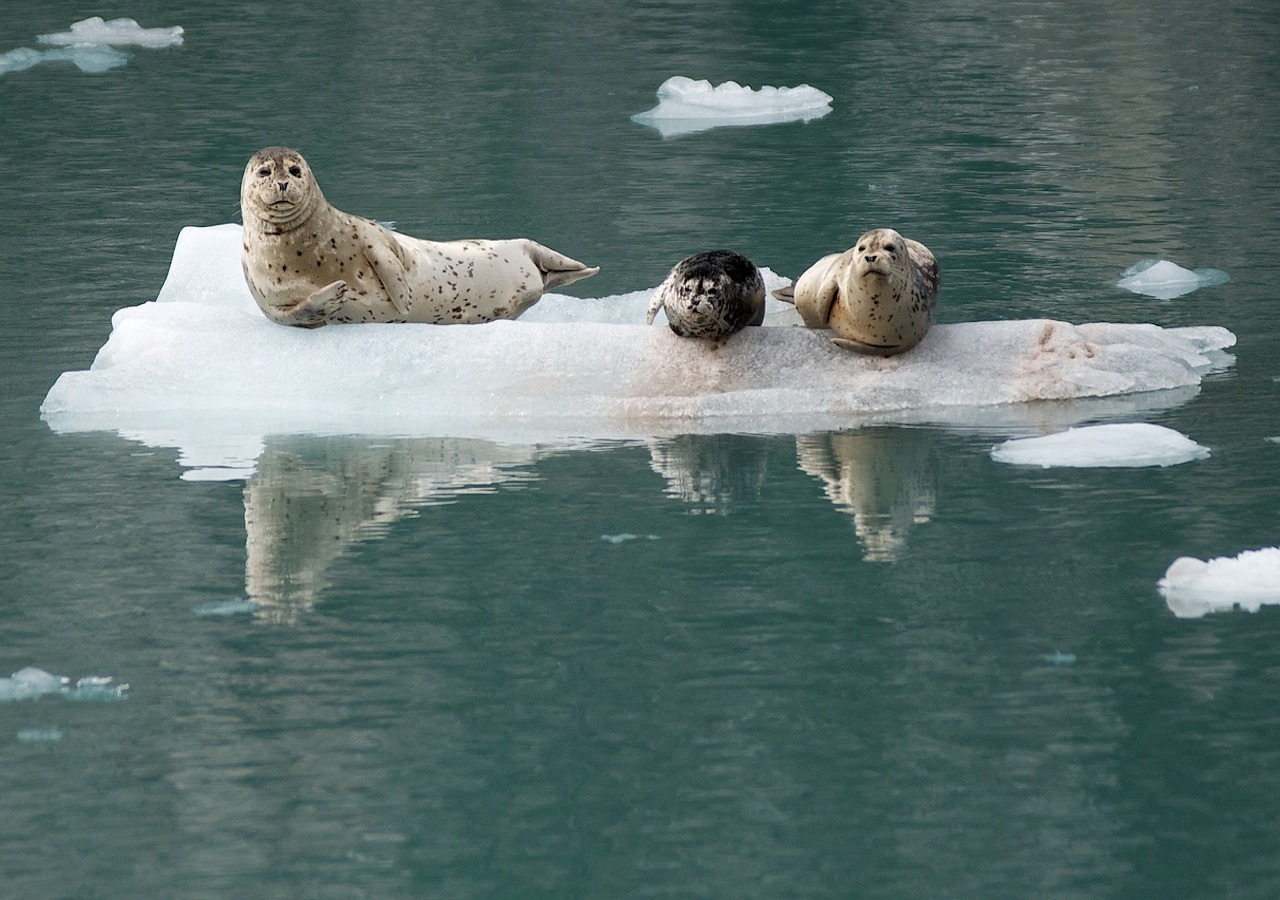 12 Days Roundtrip Alaska Cruise from Seattle + Seattle Classic Tour