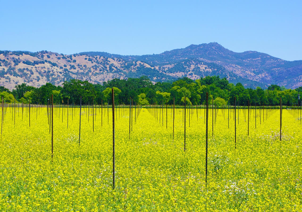 Visit Wine Vineyards located in Napa Valley -- a world renowned region for wine making