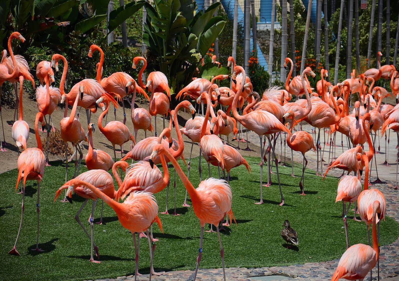 San Diego Bay/USS Midway Museum/Balboa Park/San Diego Zoo/Old Town San Dieg